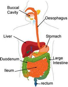 Research Article On Digestive System